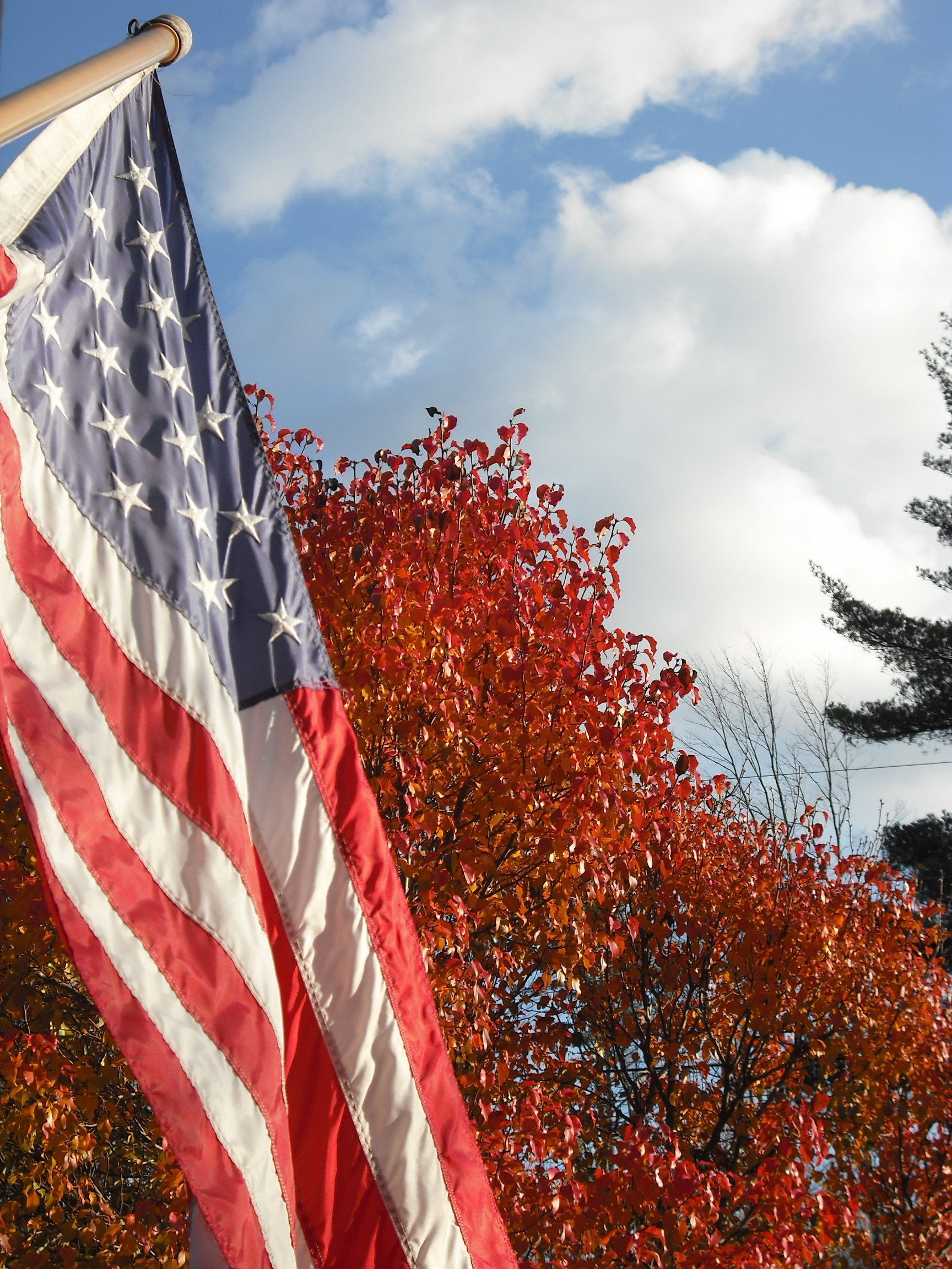 Patriotic Autumn