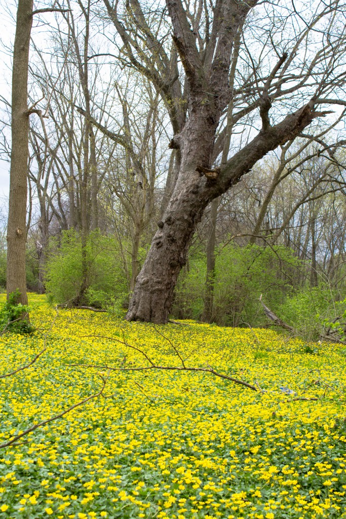 Spring flower carpet