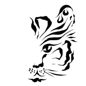 Tiger Eye1